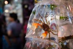 一个螃蟹在金鱼市场上在香港 免版税库存照片