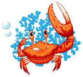 一个螃蟹 免版税库存照片