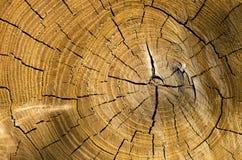 一个被削的树干的背景 免版税库存照片