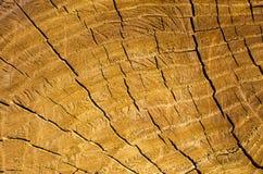 一个被削的树干的背景 图库摄影