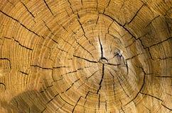 一个被削的树干的背景 库存照片