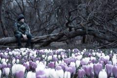 一个被弄脏的哀伤的男孩坐一棵下落的树在黑暗的公园,在他前面的许多番红花花-他淡漠,忧郁,了无欢乐 库存图片