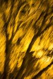 一个被弄脏的,发光的树枝和枝杈的抽象照片 免版税库存图片
