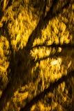 一个被弄脏的,发光的树枝和枝杈的抽象照片 免版税库存照片