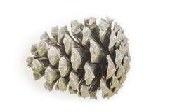 一个被隔绝的杉木锥体 库存图片