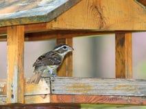 蜡嘴鸟饲养者 库存图片