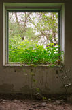 从一个被破坏的房子的窗口的看法 库存照片