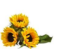 一个装饰向日葵的三朵花花束,说谎表面上 背景查出的白色 免版税库存照片