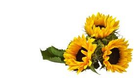 一个装饰向日葵的三朵花,说谎表面上 库存照片