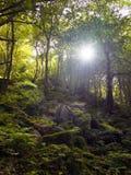 一个谷的森林地与虽则发光树的阳光 免版税库存照片