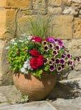 一个赤土陶器罐的五颜六色的植物,包括秋海棠,喇叭花, 库存图片