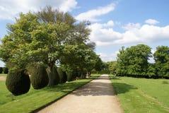 一个赤柏松修剪的花园庭院的路在Yeovil,萨默塞特,英国 库存照片