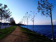 一个走道在树之间和在海旁边 库存图片