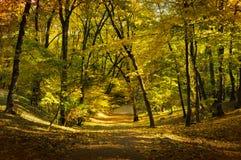 一个走道通过公园在秋天 库存图片