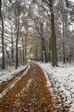 一个路径在秋天森林里 库存照片