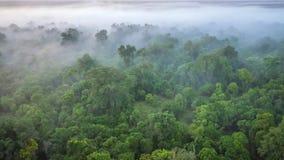 一个软的焦点,一个森林在一个有薄雾的早晨,从一个热空气气球的射击的鸟瞰图在肯尼亚的马塞人玛拉 免版税库存照片