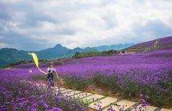 一个连续女孩在淡紫色主题乐园 免版税库存照片