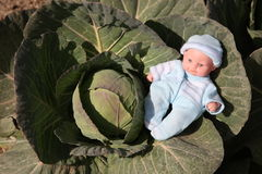 一个逗人喜爱的娃娃在圆白菜地被找到 免版税库存图片