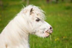 一个逗人喜爱的小马的画象 免版税库存照片