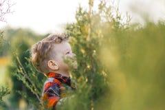 一个逗人喜爱的男孩获得乐趣外面在国家在夏天在日落 使用用黄色蒲公英的男孩在庭院里 图库摄影