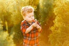 一个逗人喜爱的男孩获得乐趣外面在国家在夏天在日落 使用用黄色蒲公英的男孩在庭院里 免版税库存照片