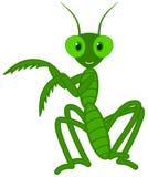 一个逗人喜爱的蚂蚱舞蹈 免版税库存照片