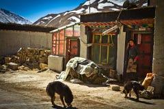 一个遥远的南部的西藏村庄在有狗和夫人的西藏 免版税库存照片