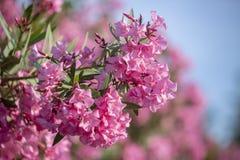 一个避暑别墅的五颜六色的庭院在斯科派洛斯岛海岛,希腊 免版税库存照片
