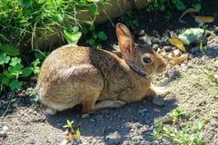 一个野兔在公园 免版税库存图片