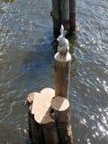一个野兔的雕塑在野兔海岛上的在圣彼德堡 库存图片