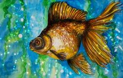 一个金鱼的水彩绘画在水中 库存图片