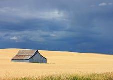 一个金黄领域的一个蓝色谷仓与蓝天 库存照片