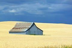 一个金黄领域的一个蓝色谷仓与蓝天 免版税库存照片