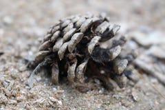 一个锥体在森林 库存图片