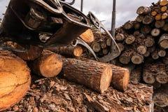 一个锯木厂的树干运输的细节在西班牙 免版税库存图片
