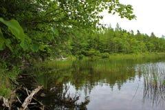 一个镇静清楚的淡水水库在森林里 免版税库存照片