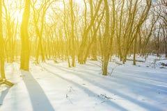 一个长的阴影的被雪包围住的森林 免版税图库摄影