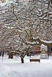 一个降雪的冬天的储蓄图象在波士顿,马萨诸塞,美国 库存图片