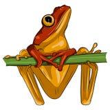 一个青蛙设计的传染媒介图象在白色背景的, 向量例证