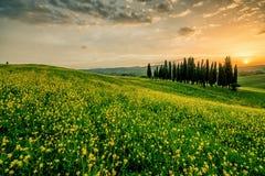 一个领域在有树的意大利在背景中 库存图片
