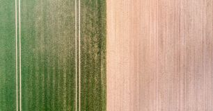 一个领域的垂直的鸟瞰图与发芽年轻植被的绿色的和黄色ungreen领域表面,抽象印象 库存图片