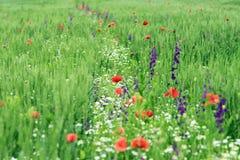一个领域的抽象图象与春天的开花 免版税库存图片