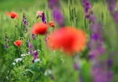 一个领域的抽象图象与春天的开花 免版税库存照片