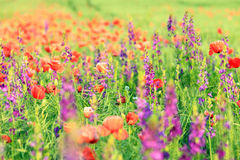 一个领域的抽象图象与春天的开花 库存照片
