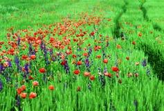 一个领域的抽象图象与春天的开花 免版税图库摄影