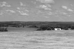 一个领域的看法在伊利诺伊国家边的 免版税库存图片