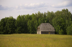 一个领域的老谷仓在森林附近 库存图片
