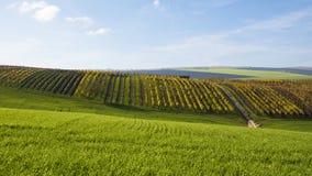 一个风景的看法与一个领域和一个葡萄园的在的秋天 免版税库存照片