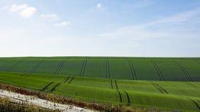一个风景的看法与一个领域和一个葡萄园的在的秋天 库存照片