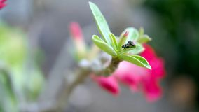 一个飞行双翅目的图象在绿色叶子的 昆虫 敌意 库存图片
